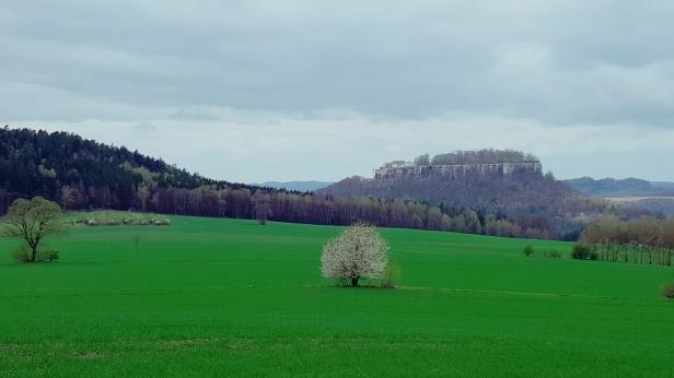 Weg um den Pfaffenstein, im Hintergrund der Königstein