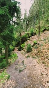 Der Waldweg beim Abstieg