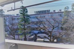Blick vom Balkon - Zeder und Kirschbaum