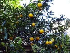 Die Zitronen
