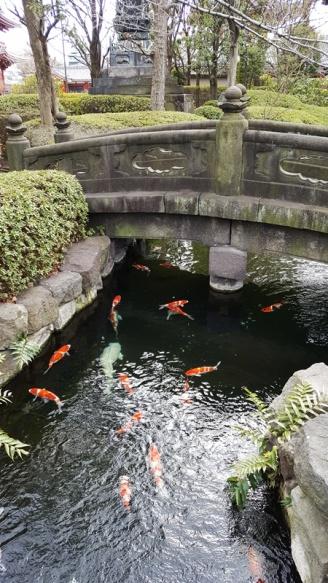 Ein Koi-Teich