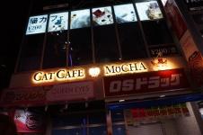 Ein Katzen-Café!